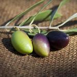 Зелені чи чорні оливки