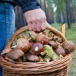 лісові гриби, або штучно вирощені