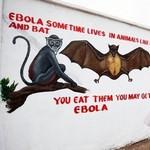 вірус Ебола передається через секс
