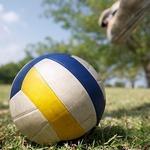 типово літні види спорту