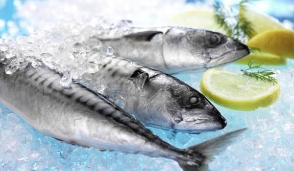 сорти риб, скумбрія