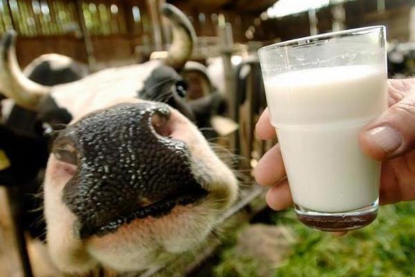 молоко проти зайвої ваги