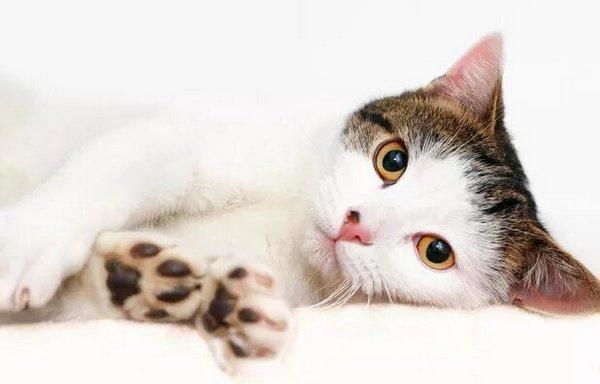 які хвороби передаються від котів собак